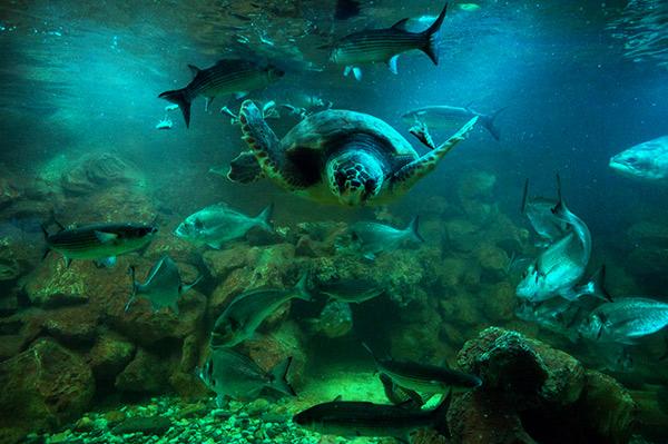 Aquarium of Elba